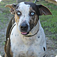 Adopt A Pet :: Stella Rose - Demopolis, AL