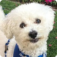 Adopt A Pet :: Eddie - La Costa, CA