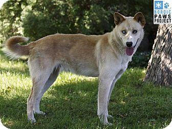 Husky Mix Dog for adoption in Ile-Perrot, Quebec - MASKA