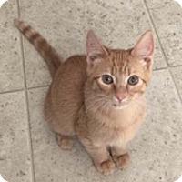 Adopt A Pet :: Twizzler - Merrifield, VA