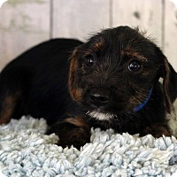 Adopt A Pet :: Jimmy - Waldorf, MD