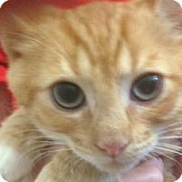 Adopt A Pet :: Nash - Sarasota, FL