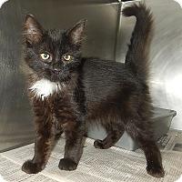 Adopt A Pet :: Roberta - Newport, NC