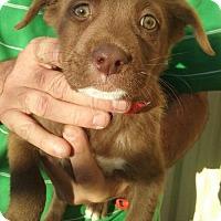 Adopt A Pet :: Scotty - Aurora, CO
