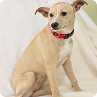 Adopt A Pet :: Cookie - Dalton, GA