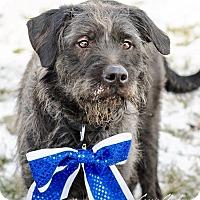 Adopt A Pet :: Lorenzo - Urgent! - Zanesville, OH
