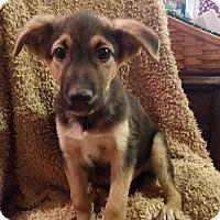 Adopt A Pet :: Grumpy - New Oxford, PA