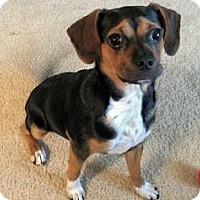 Adopt A Pet :: Jake T. - Santa Fe, TX