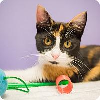 Adopt A Pet :: Ursula - Houston, TX