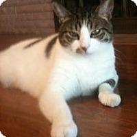 Adopt A Pet :: Kit Kit - Sacramento, CA