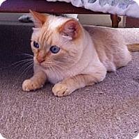 Adopt A Pet :: Jojo - Davis, CA