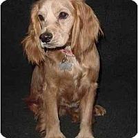 Adopt A Pet :: Cabo - Sugarland, TX