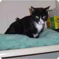 Adopt A Pet :: Darcy - Hamburg, NY