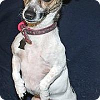 Adopt A Pet :: Lucy3 - Lynnwood, WA