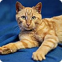 Adopt A Pet :: Monty - Athens, GA