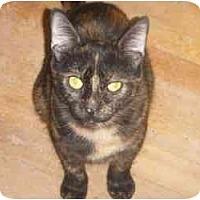 Adopt A Pet :: Josephine - Montreal, QC