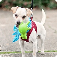 Adopt A Pet :: Pee Wee - Kingwood, TX