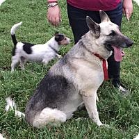 Adopt A Pet :: Ryder - Bowie, TX