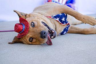 German Shepherd Dog Mix Dog for adoption in Acton, California - Cinnamon