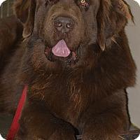 Adopt A Pet :: Teddy - Meridian, ID