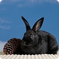 Adopt A Pet :: Winkle - Marietta, GA