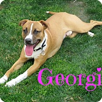 Adopt A Pet :: Georgie - Scottsdale, AZ