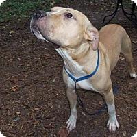 Adopt A Pet :: Blue - Ocoee, FL