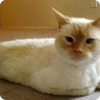 Adopt A Pet :: zz 'Jabez' Courtesy listing URGENT!!! - Cincinnati, OH