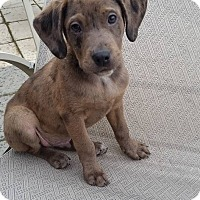Adopt A Pet :: Glover - New Oxford, PA