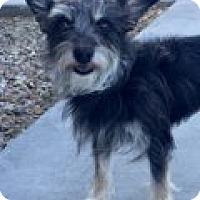 Adopt A Pet :: Corey - Las Vegas, NV