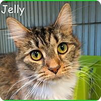 Adopt A Pet :: Jelly - Warren, PA