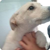 Adopt A Pet :: Aspen (adoption in process) - El Cajon, CA