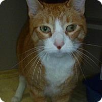 Adopt A Pet :: Sal - Hamburg, NY