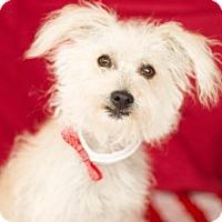 Adopt A Pet :: Kaddo - Carrollton, TX