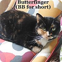 Adopt A Pet :: Butterfinger - Bentonville, AR