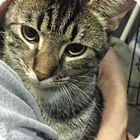 Adopt A Pet :: Rafiki - Stafford, VA
