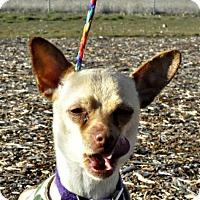 Adopt A Pet :: Shylo - Yreka, CA