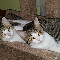 Adopt A Pet :: Khloe and Millie - Gainesville, VA