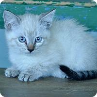 Adopt A Pet :: Skippy John - San Antonio, TX
