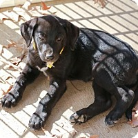 Adopt A Pet :: Heidi - Nesbit, MS