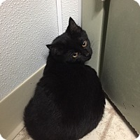 Adopt A Pet :: mary - Bryan, OH