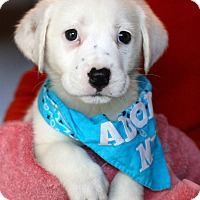 Adopt A Pet :: Ghost - West Grove, PA