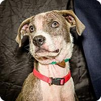 Adopt A Pet :: Alba - Martinsville, IN