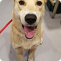 Adopt A Pet :: Bunnie - Lafayette, NJ