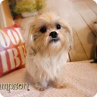 Adopt A Pet :: Sampson - Benton, LA