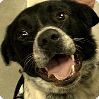Adopt A Pet :: Beethoven - Newnan, GA