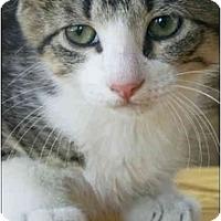 Adopt A Pet :: Pepper - Garland, TX