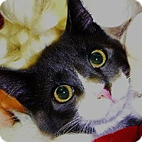 Adopt A Pet :: Oscar - Middle Island, NY