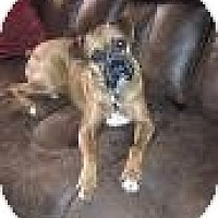 Adopt A Pet :: Que - Springfield, MO