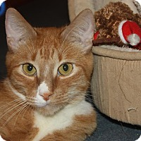 Adopt A Pet :: Thunder (LE) - Little Falls, NJ